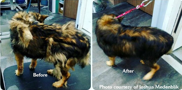 VIP Dog And Cat Grooming Salon Pet Skin Therapies In Grand Rapids Michigan 48508 De Shed Pet Hair Shedding