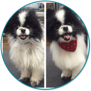 VIP Dog And Cat Grooming Salon Pet Skin Therapies In Grand Rapids Michigan 48508