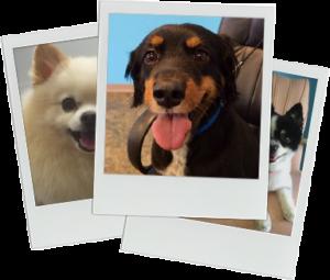 dog polaroids