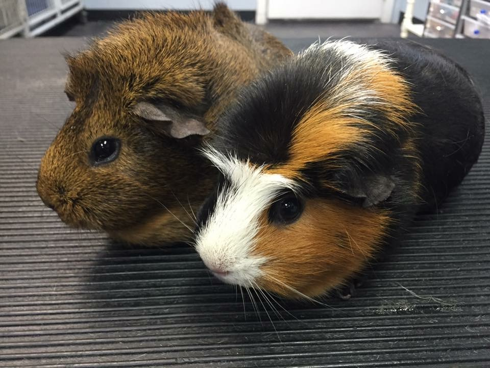 VIP Dog And Cat Grooming Salon Pet Skin Therapies In Grand Rapids Michigan 48508 small mammal pocket pet grooming