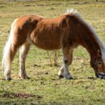 synonyms for pony at the online kid thesaurus