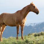 synonyms for stallion at the online kid thesaurus