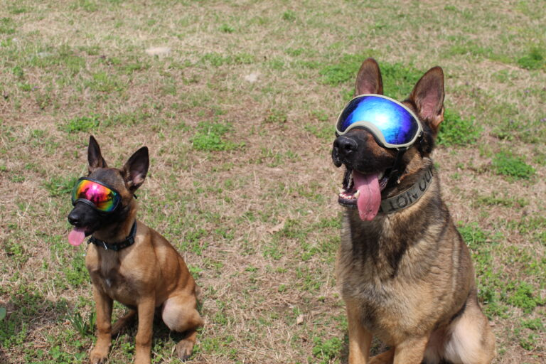 dog training point pleasant nj