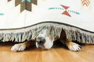 How To Help Your Anxious Dog Relax
