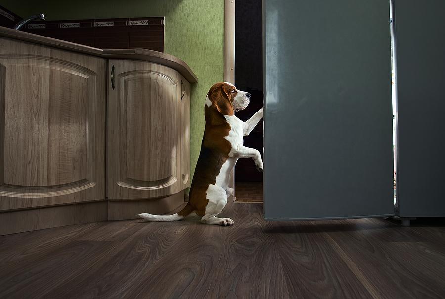 advanced dog tricks