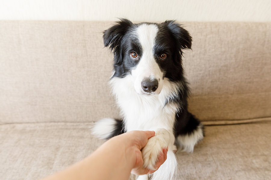 Training a Puppy vs Training a Dog - What's The Difference?
