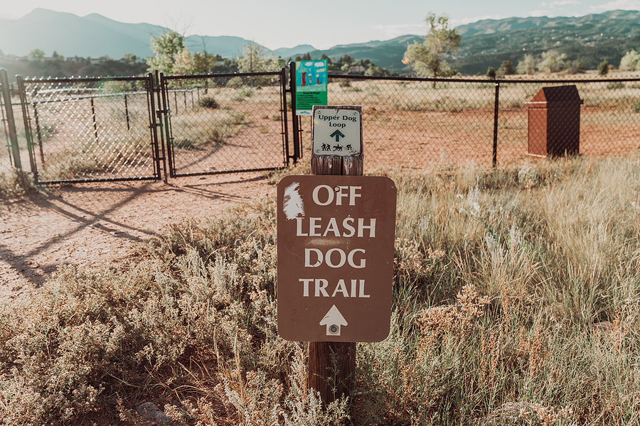 Off Leash Dog Training - What Is It And Where Do You Start?