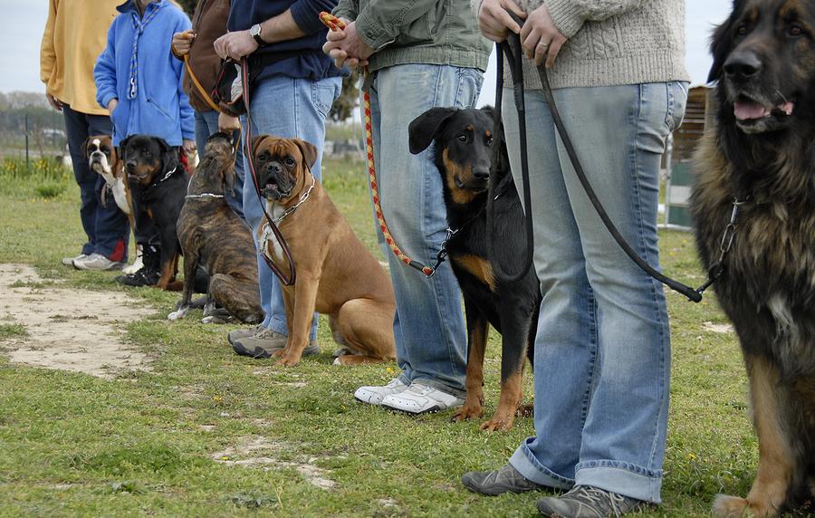 dog training boarding school