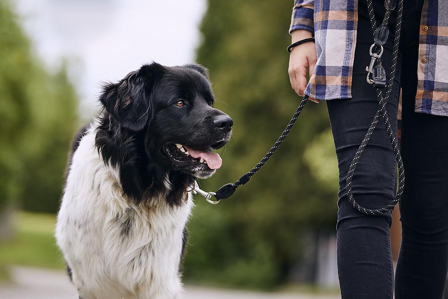 in home dog training nj;