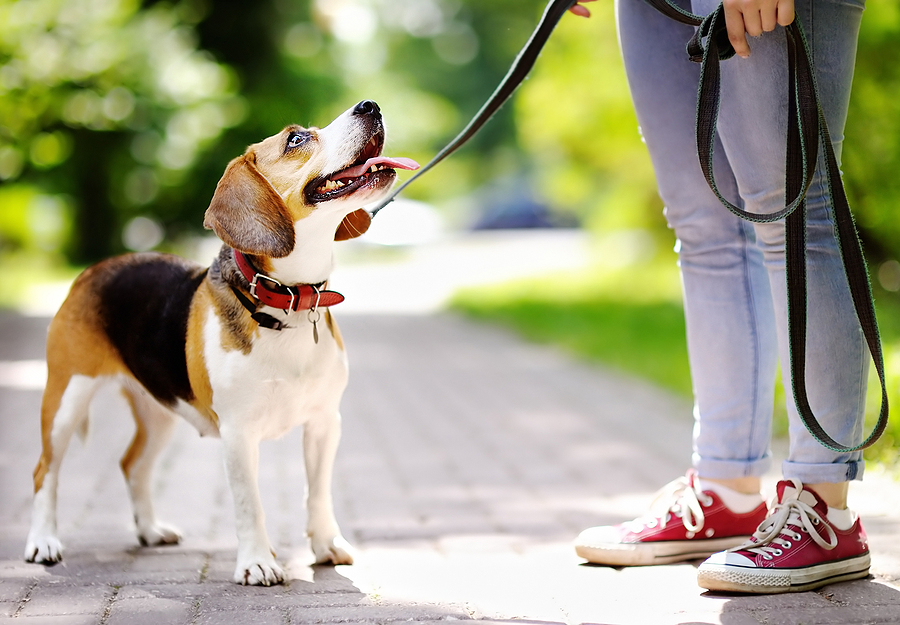 How to Rock Your Walk: The Benefits of Dog Walking, Tips and Tricks
