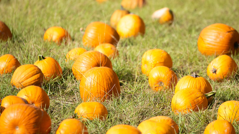 5 October Events Not to Miss in Shelby County