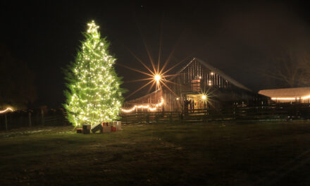 Holiday Events Not to Miss in Shelby County