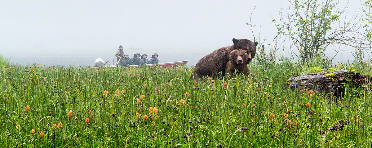 Grizzly Romance