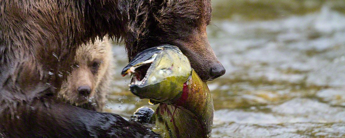 Delicious salmon!