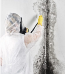 Mold-Inspection-&-Testing