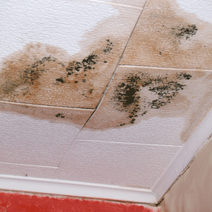 Westwood NJ Mold Removal