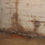 Mold loves dampness.