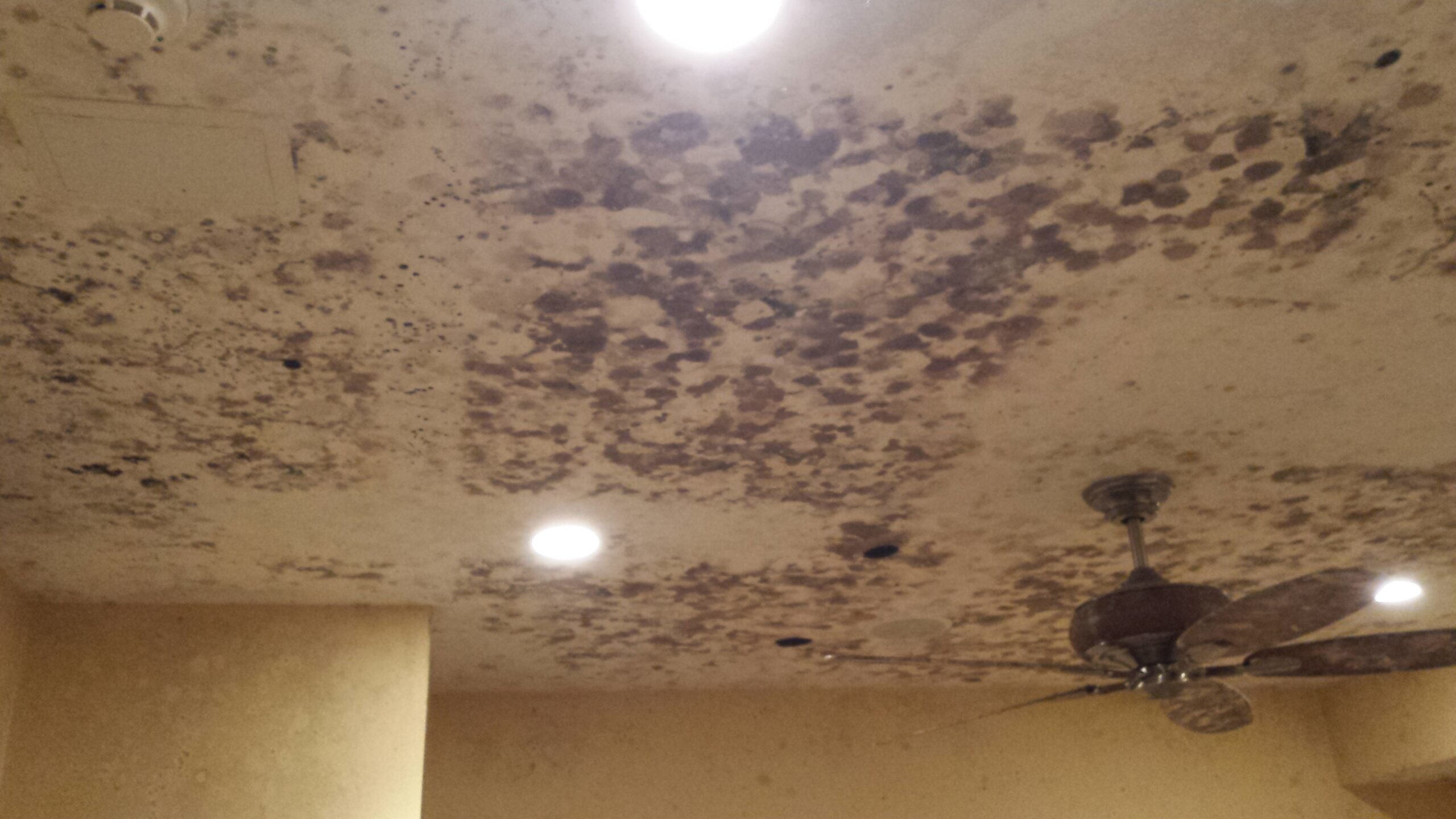 Briarcliff NY Mold Removal