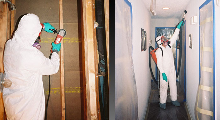 How much Does a Mold Remediation Cost?