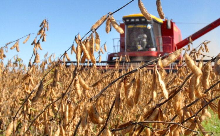 USDA marcó caída de 30 millones de toneladas en la producción mundial de granos