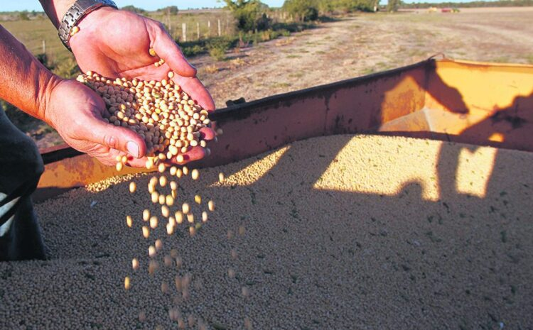 Clima y exportaciones: principales fundamentos para la valorización de la soja