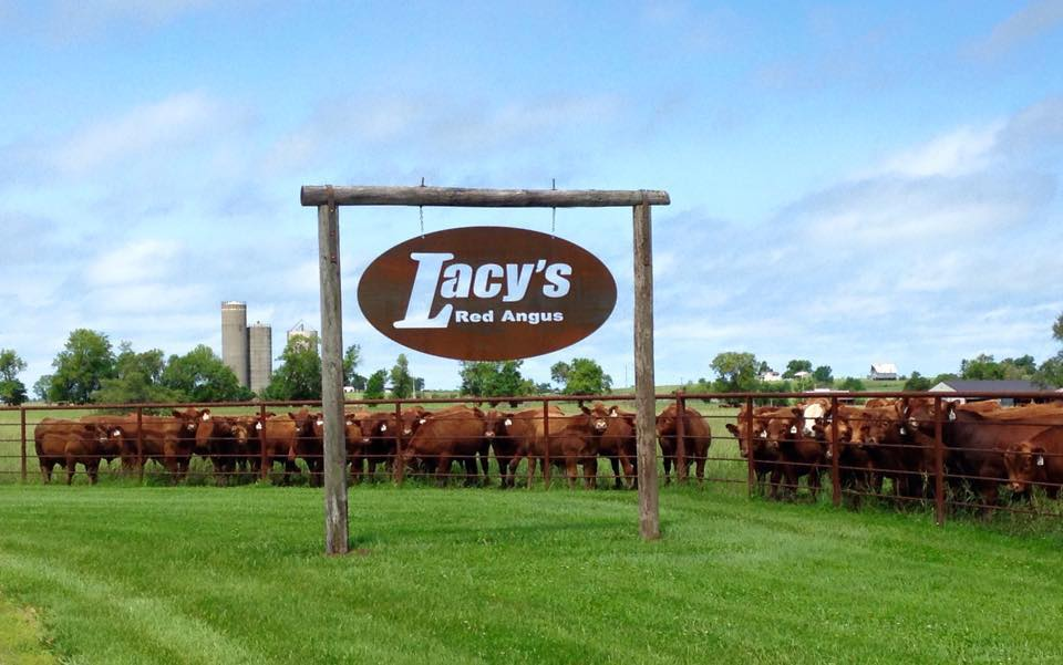 Lacy's Red Angus in Drexel, Missouri