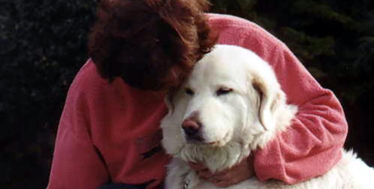 Kuvasz Bartok Seattle Purebred Dog Rescue 2