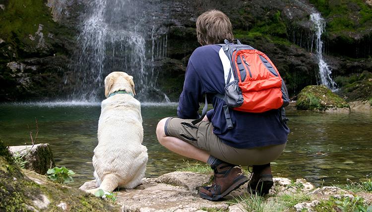 seattle purebred dog rescue labrador shutterstock_1813433