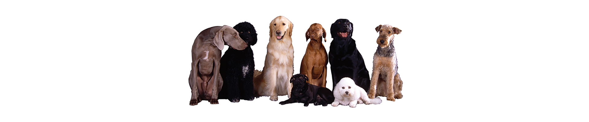 Available Breeds