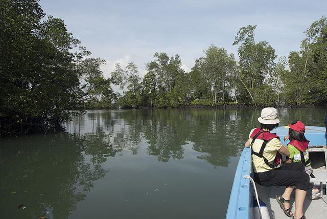 The mangroves around Sungei Jelutong
