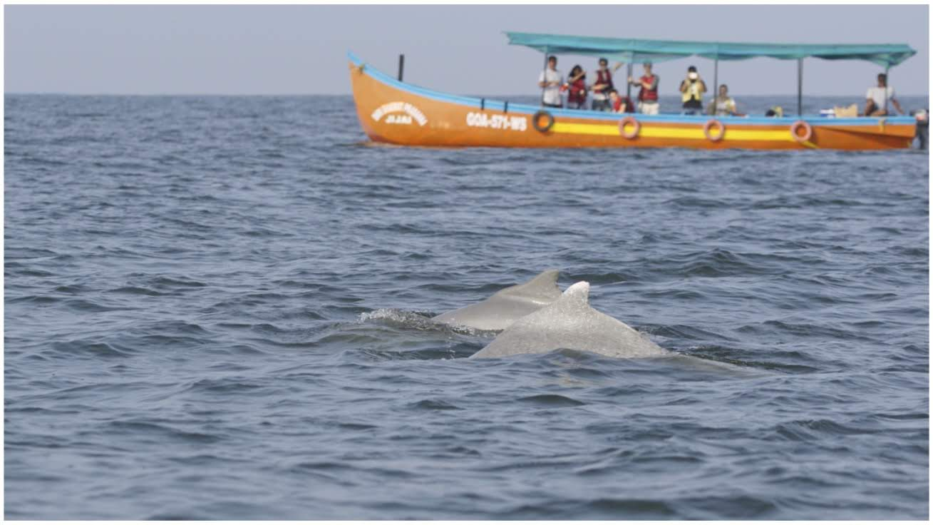 Eco Tourism Humpback Dolphins