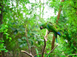 Macaw Bird in Amazon Forest