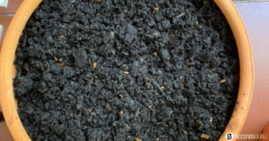 compost in focus