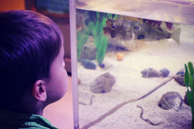 Clearwater Aquarium Henry Fish Face