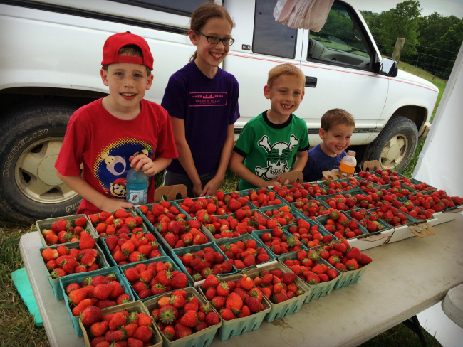 Strawberry Picking 2016 2