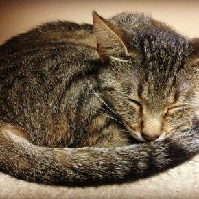 Kitty Brew Cat Cafe