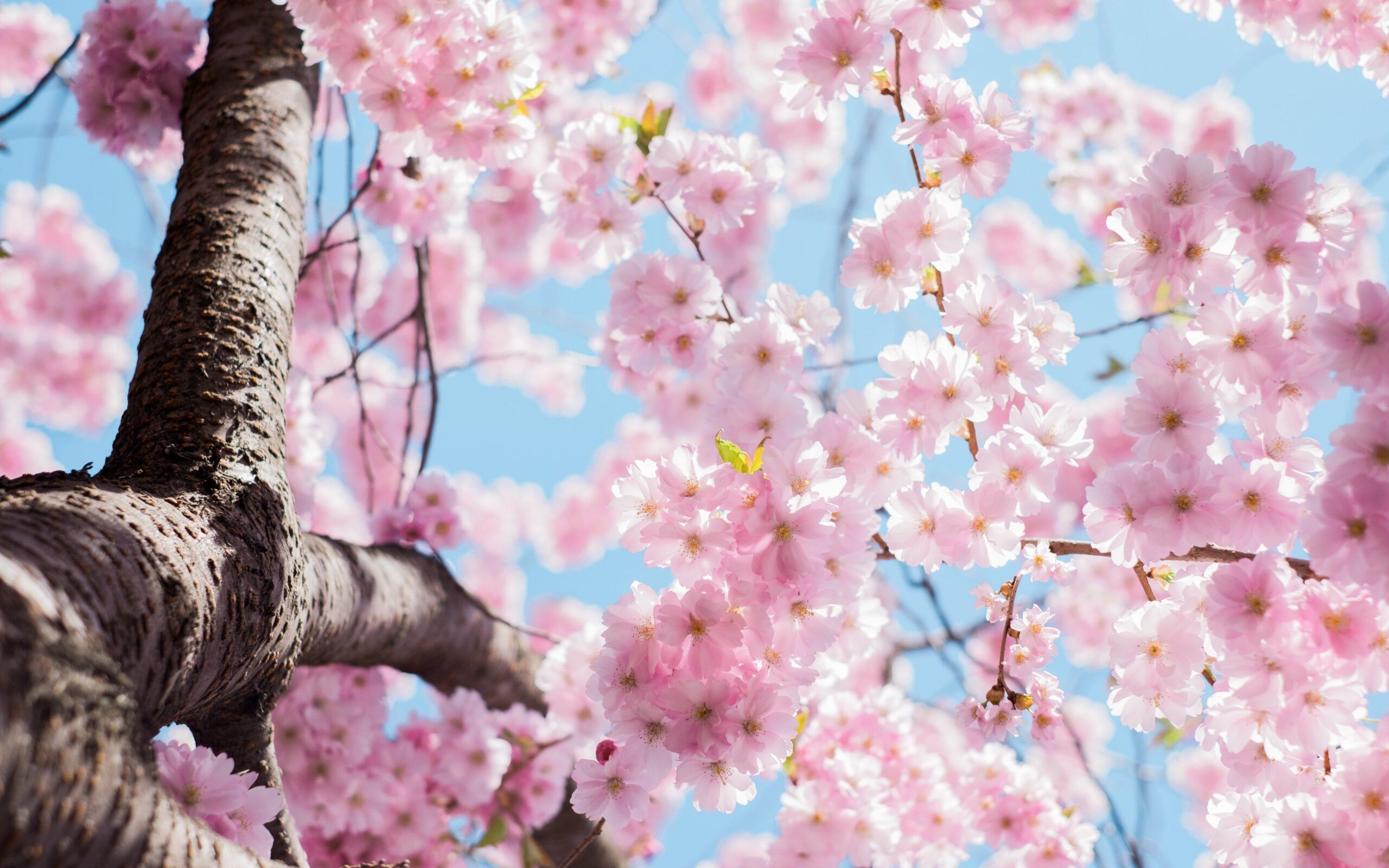 devotional, springtime, seasons, time, patience, waiting
