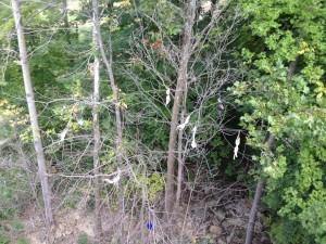 Mountain Creek Water Park Bra Tree