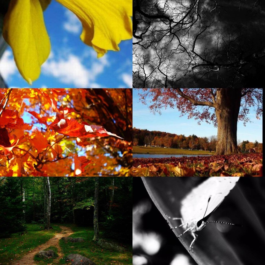 Angela put together this collage of her first nature photos, some taken a decade ago.