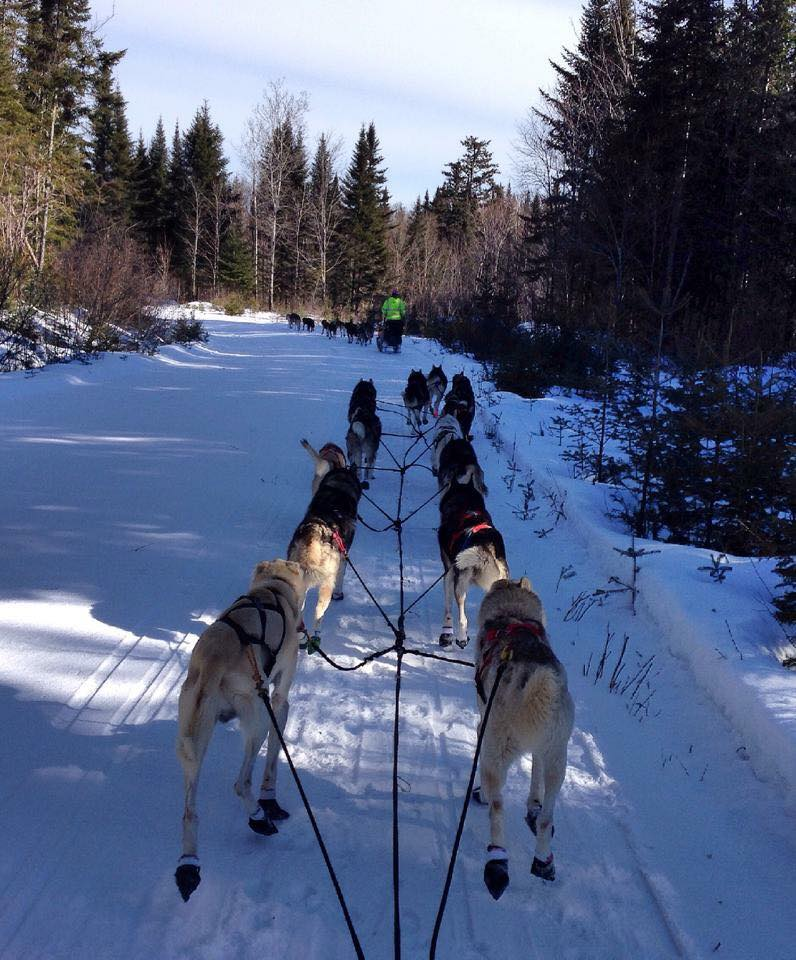 Can Am Crown Sled Dog Race