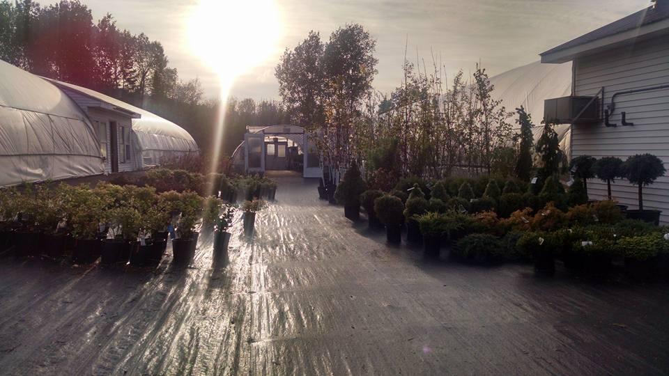 Corriveau's Hilltop Blossoms - Greenhouses