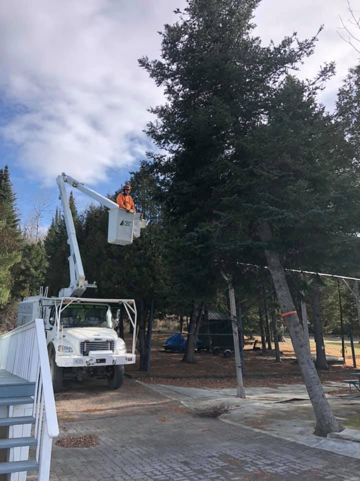 Marquis Tree Works (Bucket Truck)