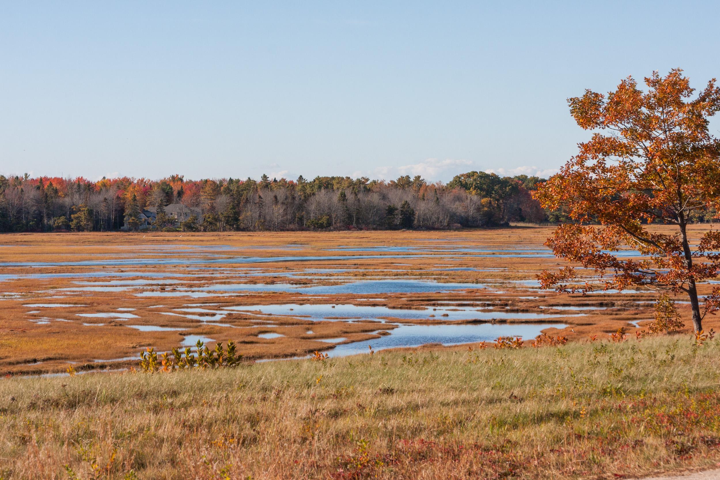Marsh FAll 2