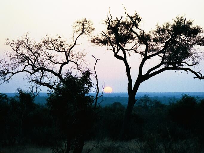 014-South Africa