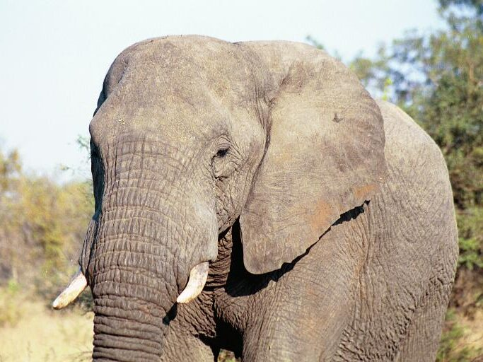 167-South Africa