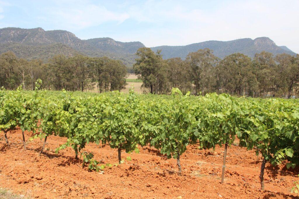 Tyrrell's winery Hunter Valley, Australia