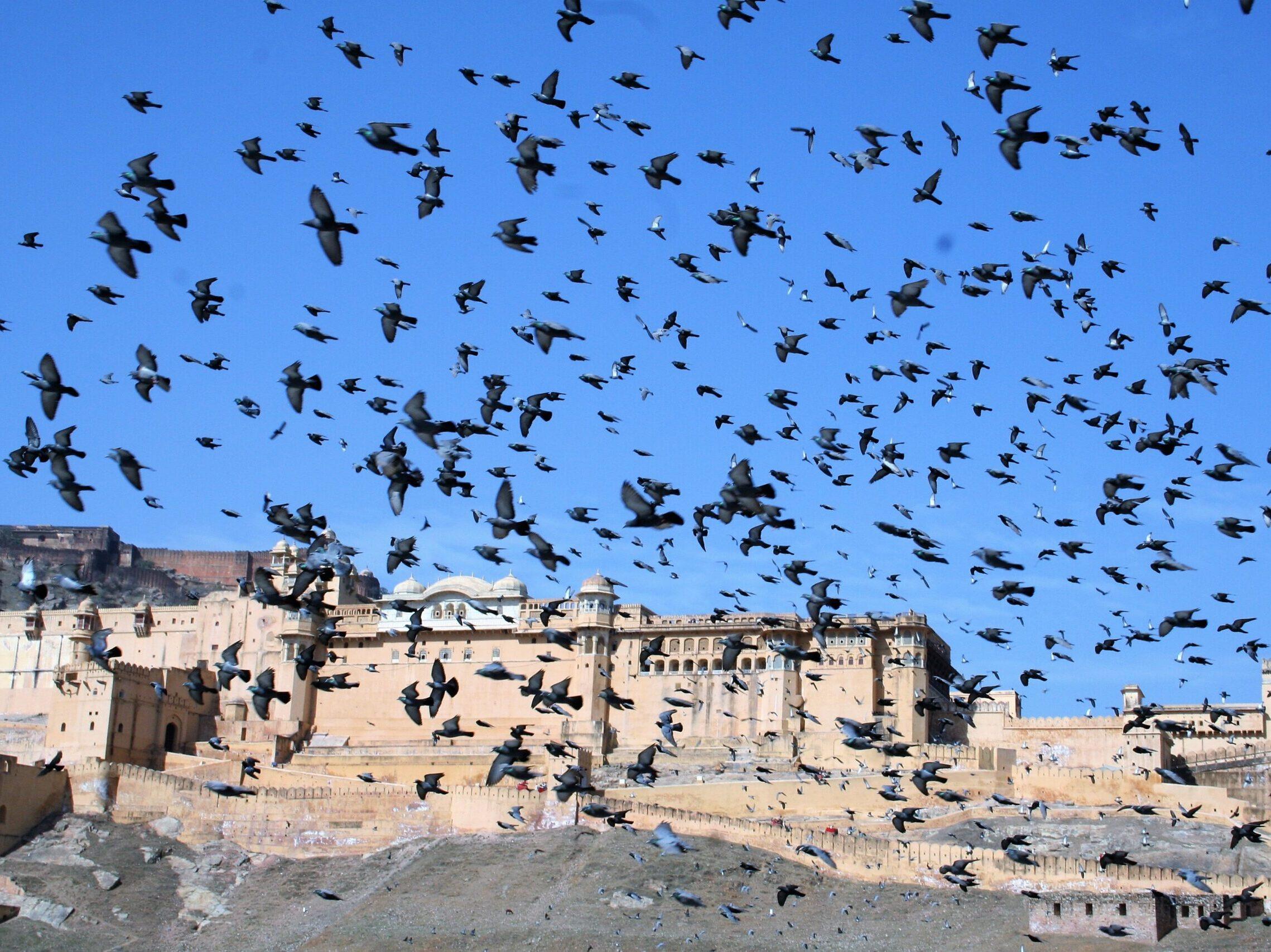 Jaipur, India bird sky