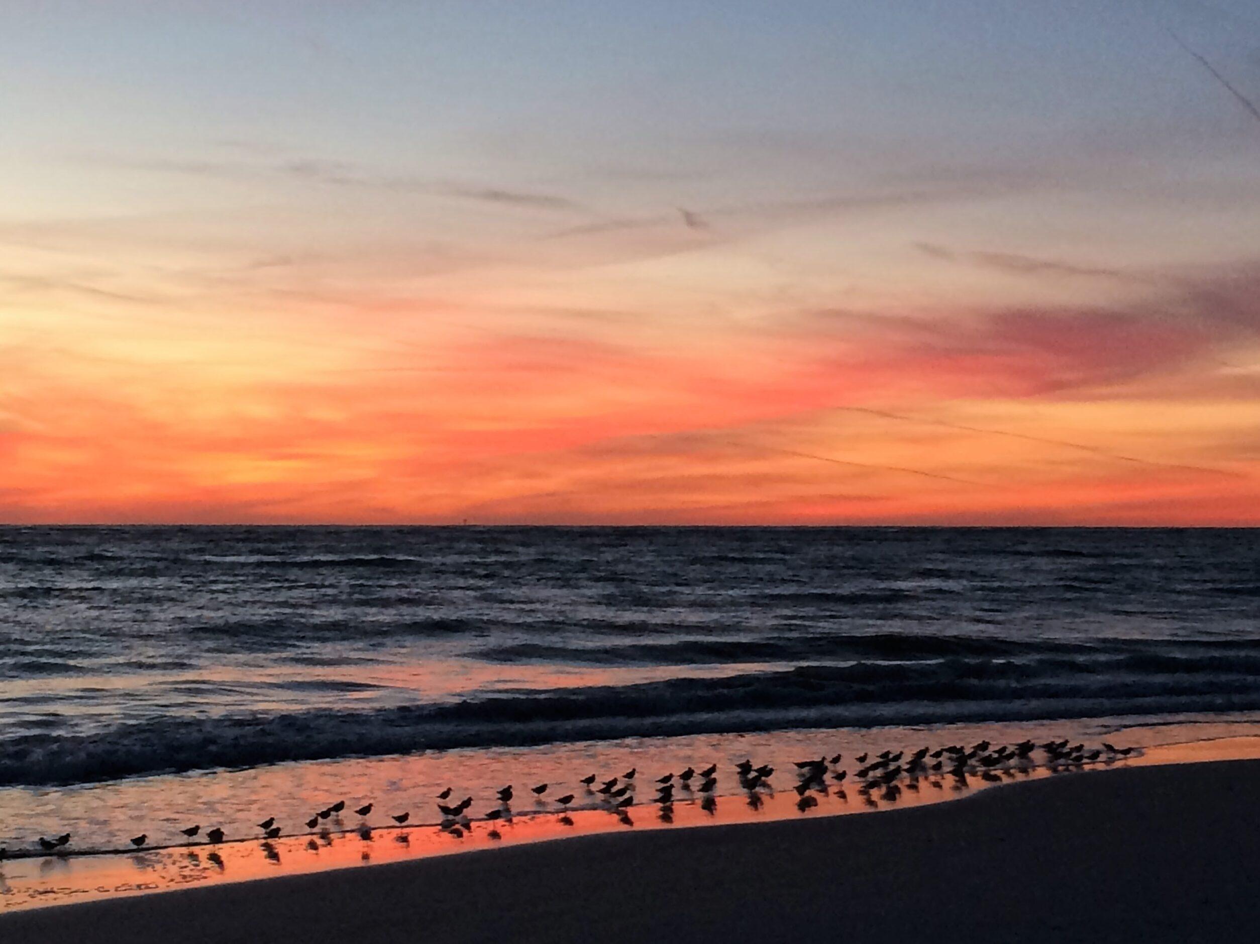 Sarasota Bird Sunset