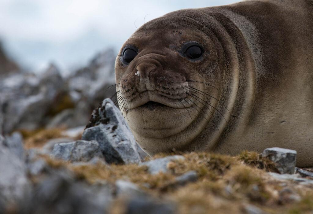 Seal Antarctica