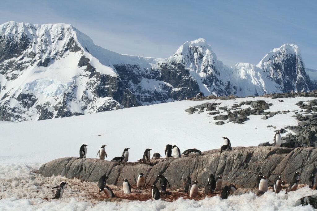 Penguin colony Antarctica